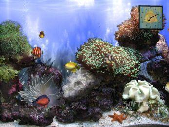 Anemone`s Reef Screenshot 2