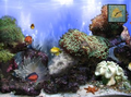 Anemone`s Reef 1