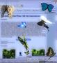 Desktop Butterflies 3D Screensaver 1