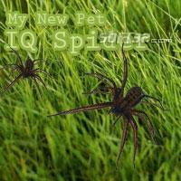 IQ Spider Screenshot 3