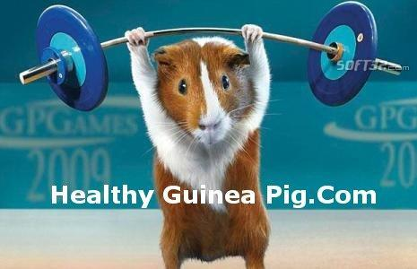 guinea pig information Screenshot