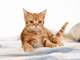 Kittens, Kittens, Kittens 1