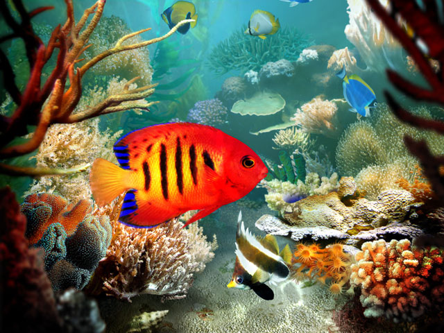 Tropical Fish 3D Screensaver Screenshot 1