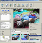 Photo Backup (Win2000/XP) 1