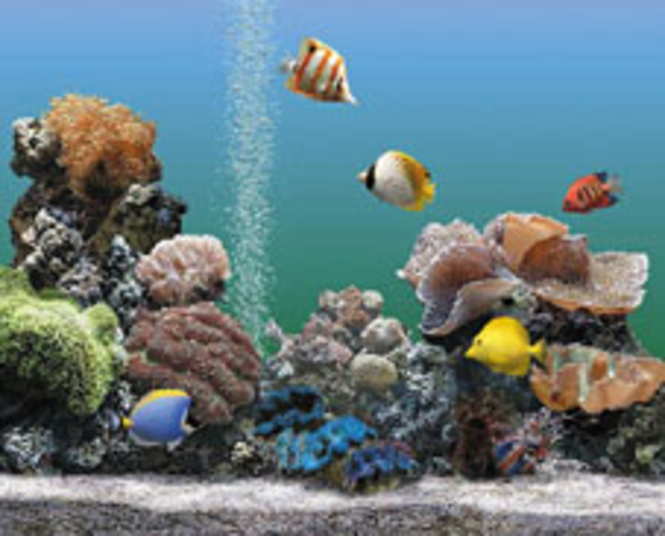 AQUARIUM 2.0 Deluxe (für Windows PC + Mac) Screenshot