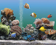 AQUARIUM 2.0 Deluxe (für Windows PC + Mac) 1