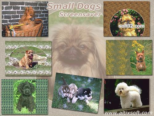 Small Dogs Screensaver Screenshot 2