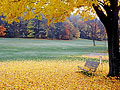 """Fall"" in Love Screen Saver 2"
