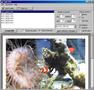 Swift PDF 1