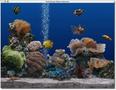 Aquarium Update 1