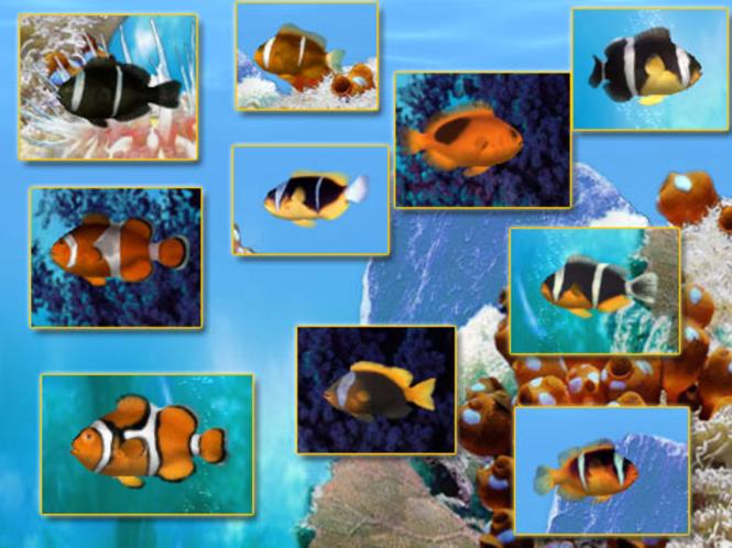 Apps mate | mindaxe blog: free download crawler 3d marine aquarium.