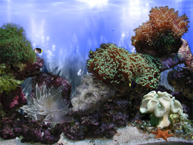 Aquarium Relief - Coral Landscape Screenshot