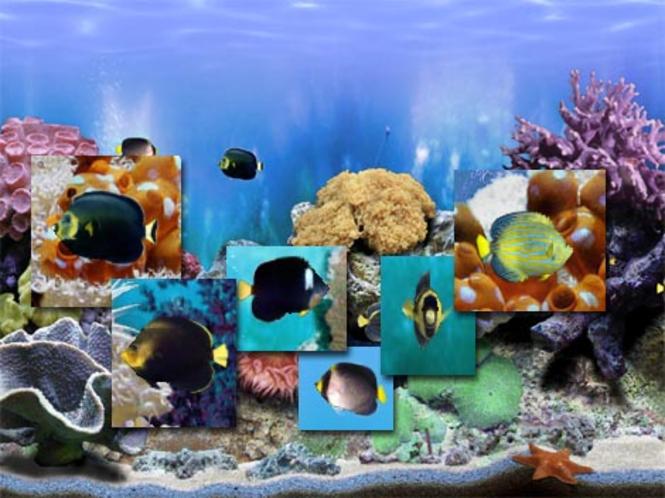 Amazing 3D Aquarium Genicanthus Fish Pack - 4 Screenshot 1