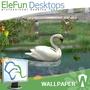 Garden - Animated Wallpaper 1