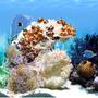 Elefun Aquarium Membership 1