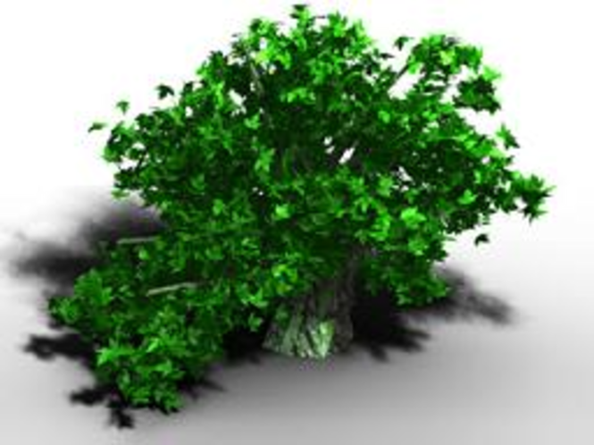 TreeGenerator Screenshot