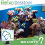 Beautiful Reef - Animated 3D Wallpaper 1