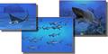 Aquarium Haie 2 - Das Original! 1