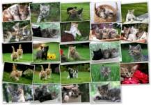 Cute Kitties Screenshot