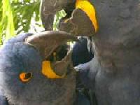The Real Macaws Screenshot 1