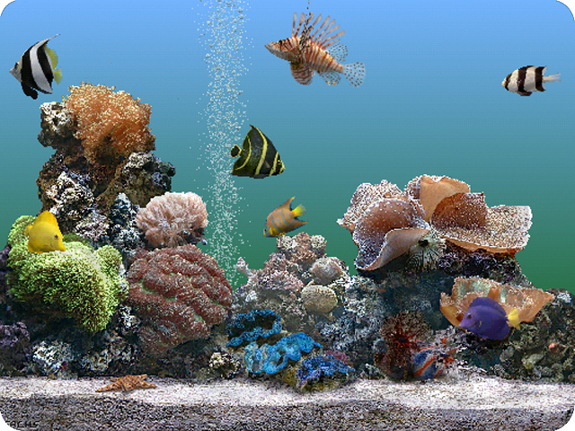 Marine Aquarium OS 9 Screenshot 1