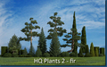 HQ Plants 2 - fir trees 1