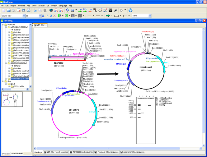 NoeClone Advanced Edition Screenshot