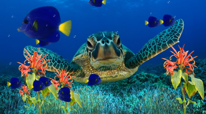Coral Reef Aquarium Screensaver Screenshot