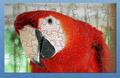 DCL Pretty Bird Parrot 1