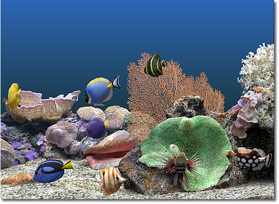 serenescreen aquarium gratuitement