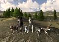 WolfQuest 1