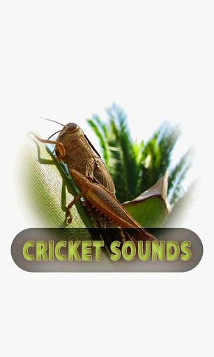 Cricket sounds Screenshot