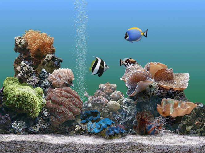 Dream Aquarium Screensaver Screenshot 3