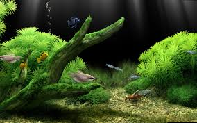 Dream Aquarium Screensaver Screenshot 5