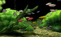 Dream Aquarium Screensaver 4