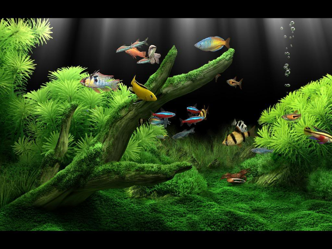 Dream Aquarium Screensaver Screenshot 6