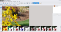 Magix Photo Designer 2