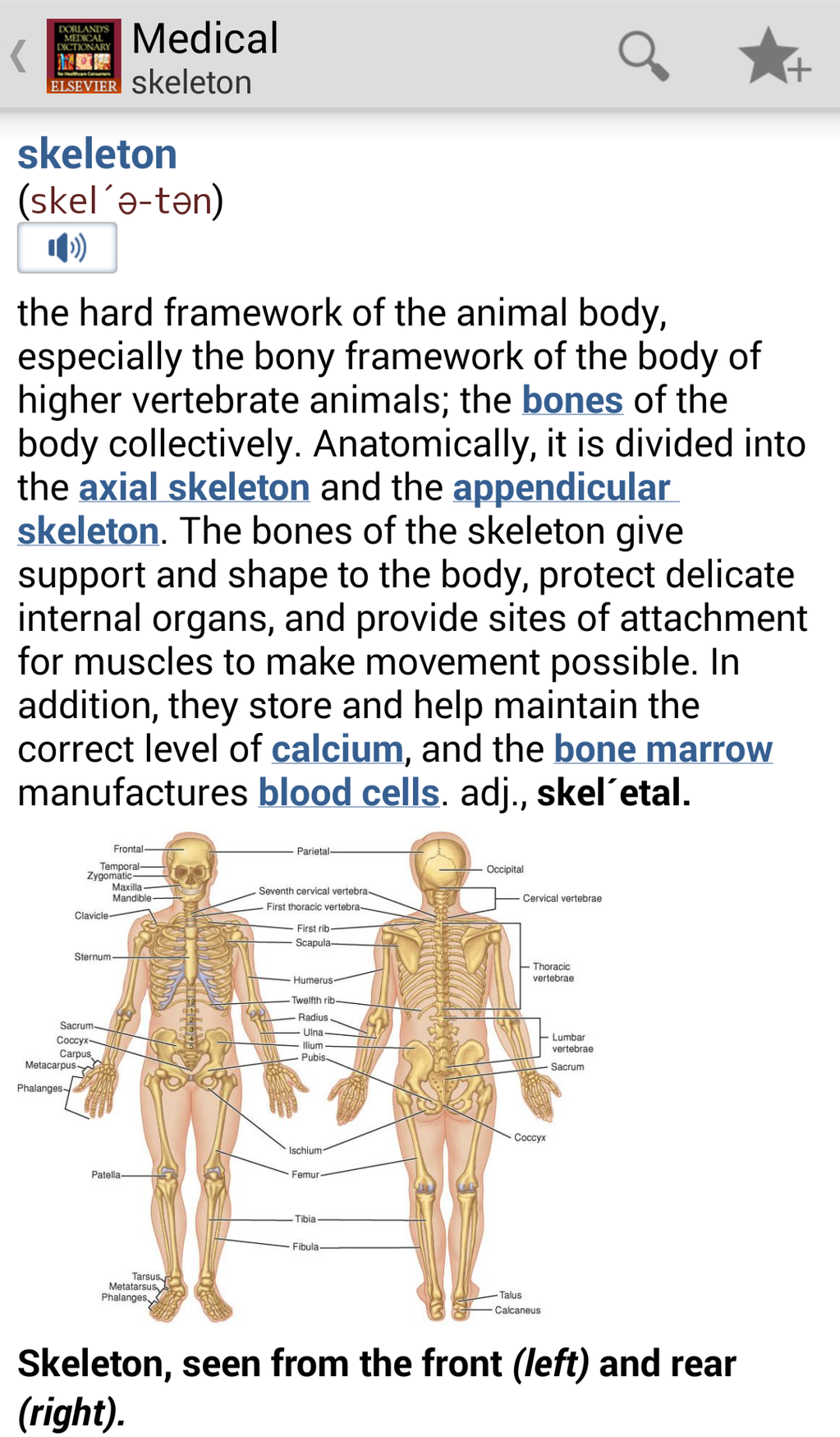 Dorland's Medical Dictionary Screenshot 11