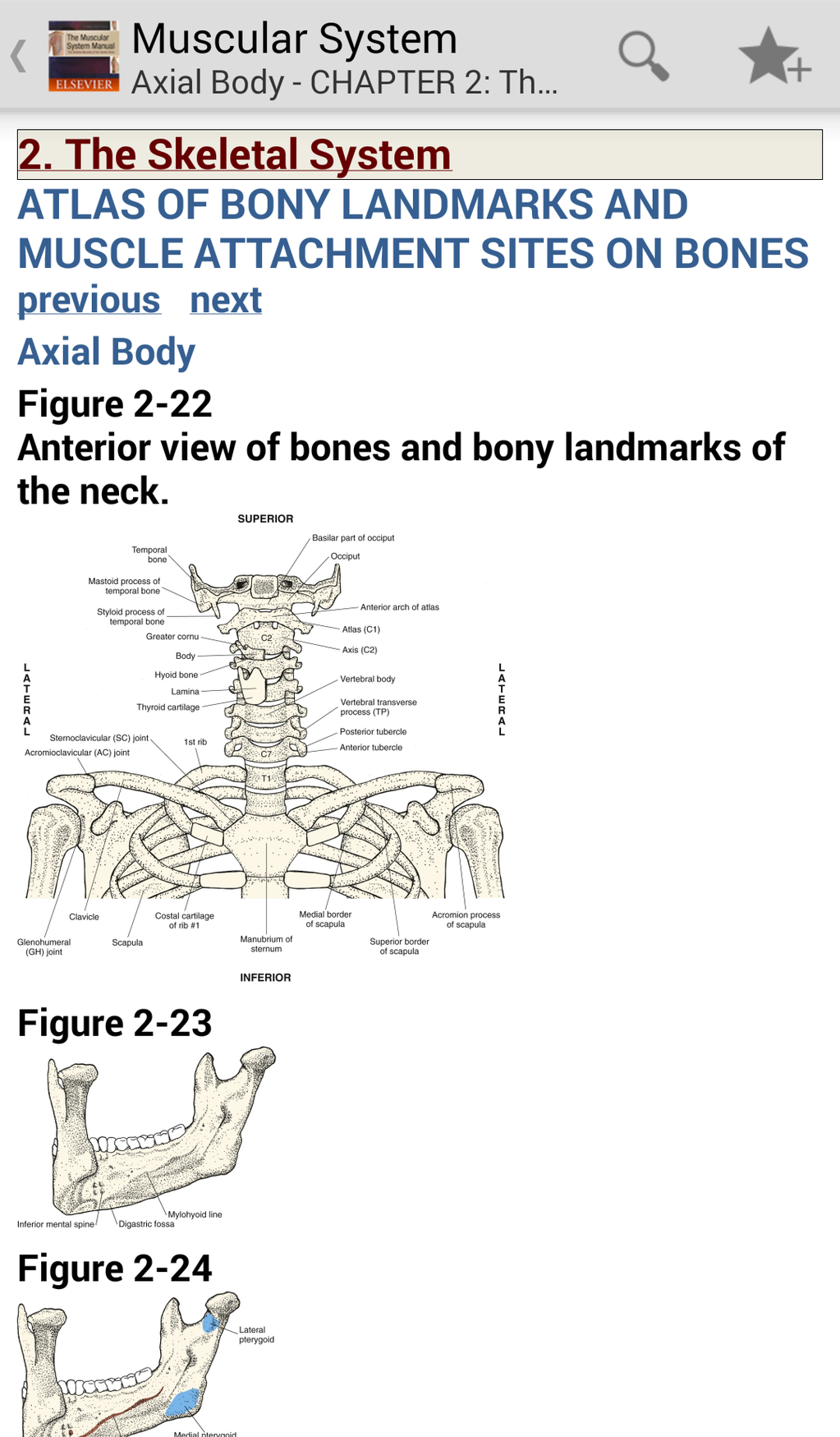 The Muscular System Manual: The Skeletal Muscles of the Human Body Screenshot 2