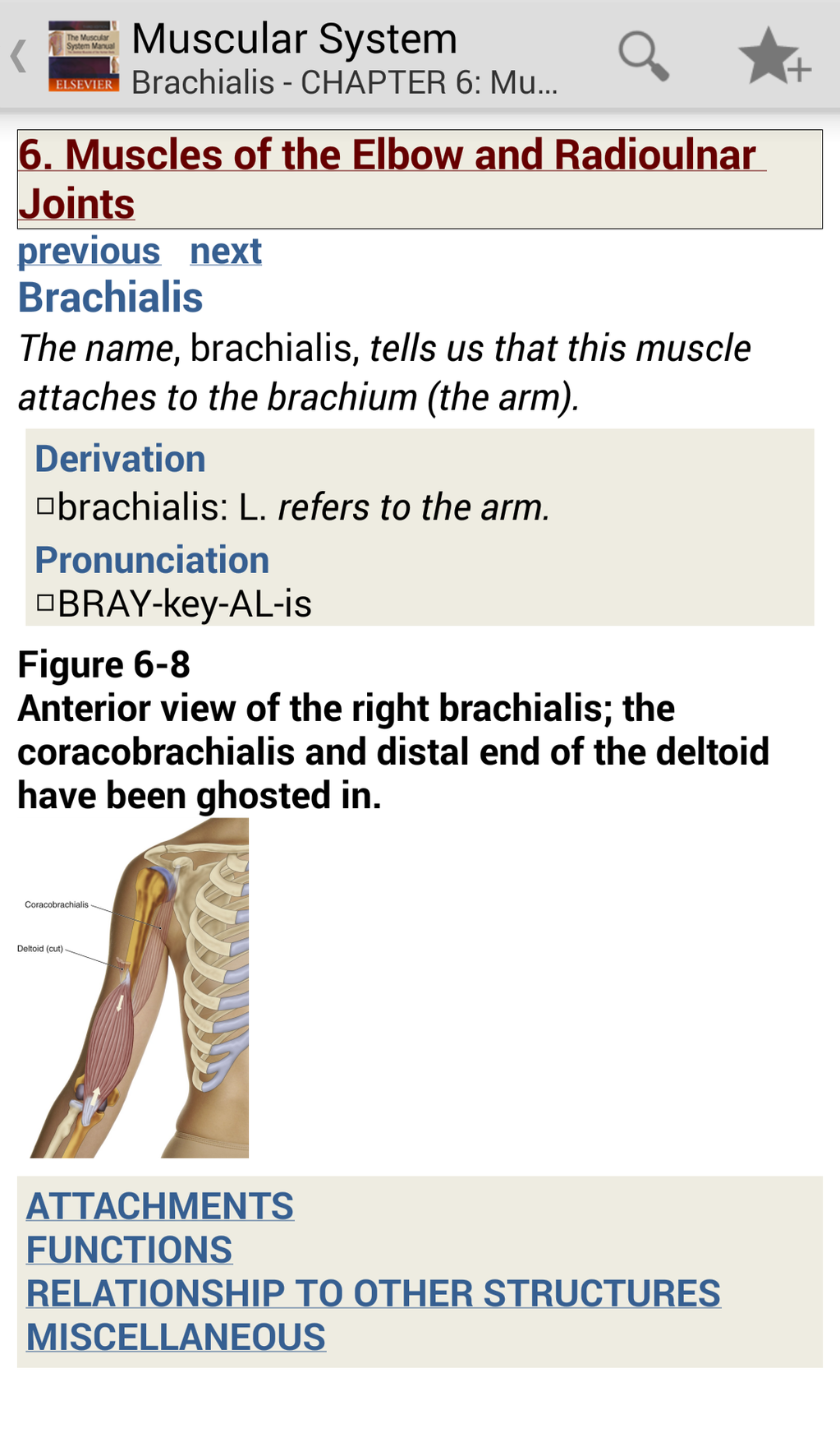 The Muscular System Manual: The Skeletal Muscles of the Human Body Screenshot