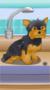 Poor Little Dog: Yorkie 2