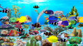 Blue Ocean Aquarium Wallpaper 2