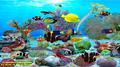 Dolphins Aquarium 2