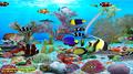 Dolphins Aquarium 3
