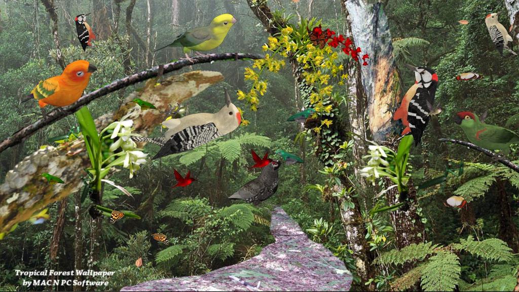 Tropical Rain Forest Screenshot 2