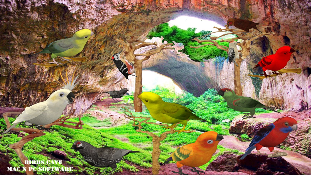 Birds Cave Screenshot