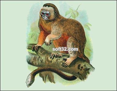 Monkeys and Lemurs Screenshot 2