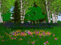 Woodland Dreams Screensaver Screenshot