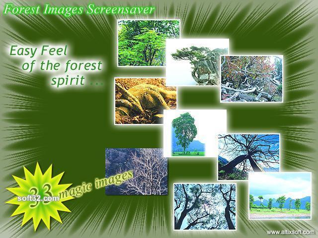 Forest Images Screensaver Screenshot 2