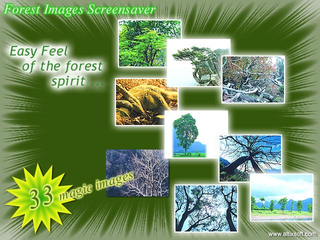 Forest Images Screensaver Screenshot